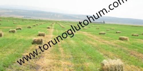 Yaz Otu Tohum Fiyatları